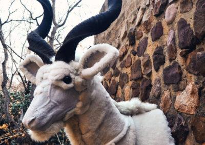Sheepskin kudu